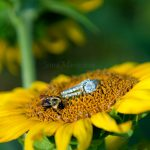 Engaged: Josh and Amanda