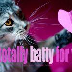 A Kitten Valentine