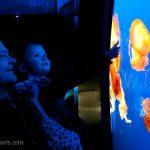 Diachuk: Vancouver Aquarium Family Photos