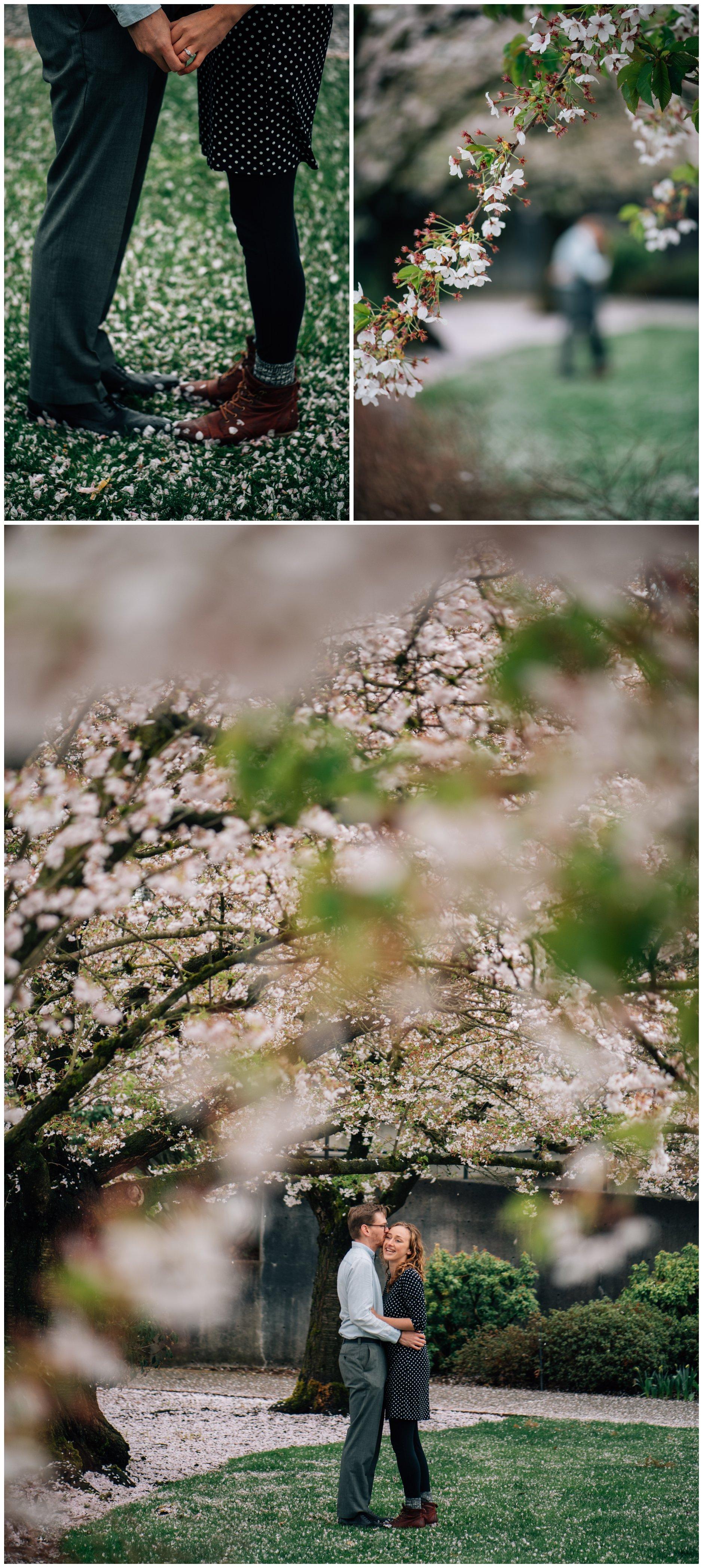 Abbotsford Cherry Blossoms