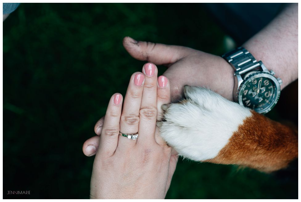 bernese mountain dog engagement photo
